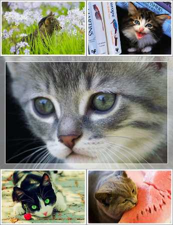 Wallpapers - Funny Cats Pack 15